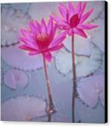 Pink Lily Blossom Canvas Print