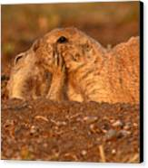 Prairie Dog Tender Sunset Kiss Canvas Print