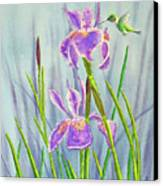 Purple Dutch Iris And Hummer Canvas Print