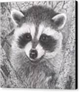 Raccoon Kit Canvas Print