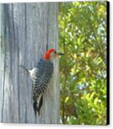 Redheaded Woodpecker Canvas Print by Marie Bulger