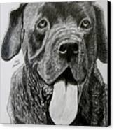Sampson Canvas Print