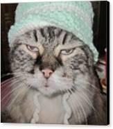 Sassy Sassy Cat Canvas Print