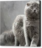 Scottish Fold Cats Canvas Print by Evgeniy Lankin