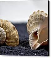 Seashells On Black Sand Canvas Print