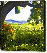 Shady Vineyard Canvas Print