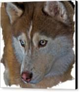 Siberian Husky Canvas Print by Larry Linton