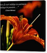 Single Tiger Lily Poster Canvas Print