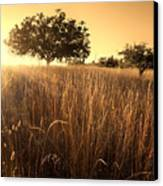 Sun-kissed California Meadow Canvas Print by Matt Tilghman