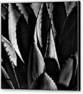 Sunlit Cactus Canvas Print