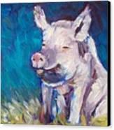 Sweet Susie Canvas Print by Sheila Tajima