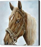 The Boss' Mount Canvas Print by Cathy Cleveland