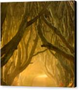 The Dark Hedges IIi Canvas Print by Pawel Klarecki
