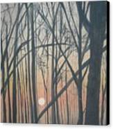 The Pines From The Treehouse Canvas Print