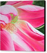 The Pink Canvas Print by Lucinda  Hansen