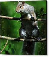 The Squirrel From Fairyland Canvas Print
