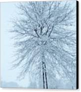 The Winter Tree  Canvas Print by Lori Frisch