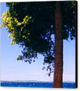 Tree By The Lake 3 Canvas Print