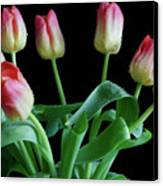 Tulip Bouquet Canvas Print by Tracy Hall
