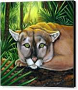 Watching  Florida Panther Canvas Print