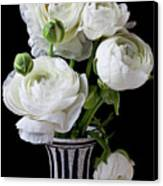 White Ranunculus In Black And White Vase Canvas Print by Garry Gay