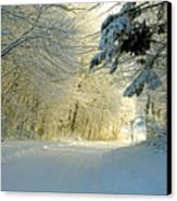 Winter Forest In The Warm Light From The Sunset Canvas Print by E Petersen