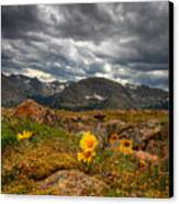 12000 Foot Flower Canvas Print by Peter Tellone