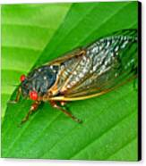 17 Year Periodical Cicada Canvas Print