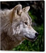 Arctic Wolf Portrait Canvas Print by Michael Cummings