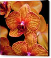 Deep Cut Orchid Society 15th Annual Orchid Show Canvas Print by Dan Pfeffer