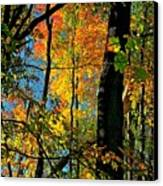 Fall Fire Works Canvas Print