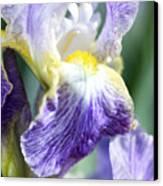 Iris Flowers Canvas Print