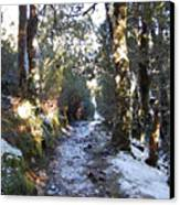 King Billy Forest Cradle Mountain Canvas Print