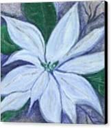 Midnight Poinsettia Canvas Print