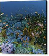 Reef Scene With Coral And Fish Canvas Print by Mathieu Meur