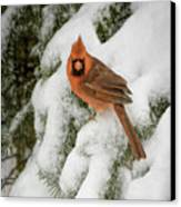 Winter Cardinal Canvas Print by LeeAnn McLaneGoetz McLaneGoetzStudioLLCcom