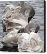 4 Swans Canvas Print