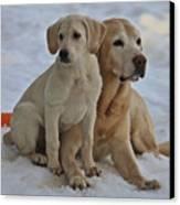 Yellow Labradors Canvas Print