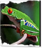 Red-eyed Leaf Frog Canvas Print