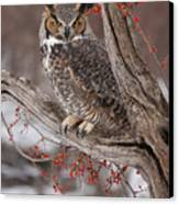 Great Horned Owl Canvas Print by Cindy Lindow