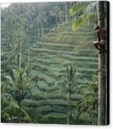 A Bahasa, Or Coconut Tree Climber Canvas Print