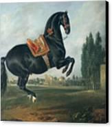 A Black Horse Performing The Courbette Canvas Print by Johann Georg Hamilton