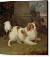A Blenheim Spaniel Canvas Print by William Webb
