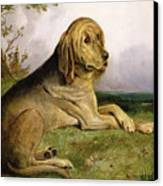 A Bloodhound In A Landscape Canvas Print by English school