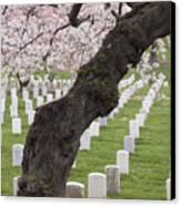 A Cherry Tree In Arlington National Cemetery Canvas Print