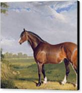 A Clydesdale Stallion Canvas Print by John Frederick Herring Snr