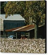 A Cotton Field Surrounds A Small Farm Canvas Print by Medford Taylor