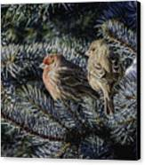 A Couple Of House Finch Canvas Print by LeeAnn McLaneGoetz McLaneGoetzStudioLLCcom