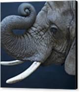 A Female African Elephant, Loxodonta Canvas Print