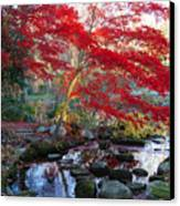 A Japanese Maple With Colorful, Red Canvas Print by Darlyne A. Murawski